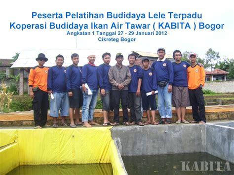 Bibit Lele Bogor kabita bogor koperasi budidaya ikan air tawar bogor