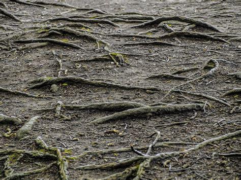 vancouver preventative tree care invasive roots