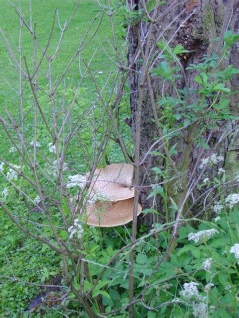 Pilze Im Garten Schlimm by Kulturpilz De Thema Anzeigen Pilze In Meinem Garten