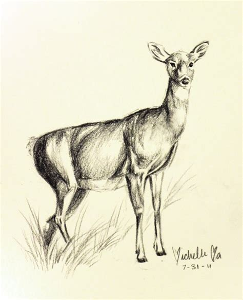deer sketch by generallyspeaking on deviantart