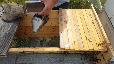 top bar hive queen excluder queen excluder top bar hive beekeeping transferring bees