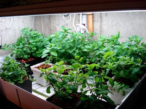 1000 images about growing herbs in the garden on 1000 images about growing herbs indoors on pinterest