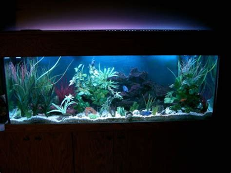 beautiful home aquarium design ideas 50 beautiful fish aquarium designs kerala home design