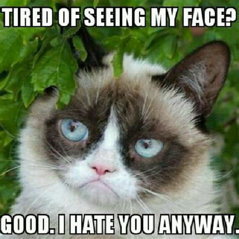 Grumpy Face Meme - 1000 images about grumpy cat on pinterest jokes memes and grumpy cat humor