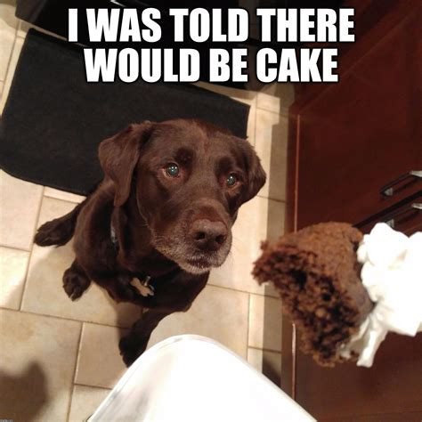 Chocolate Lab Meme - i was told there would be cake imgflip