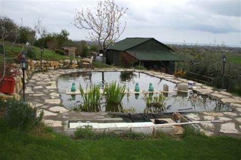 giardino koi allevamento koi giapponesi e laghetti koi giardino