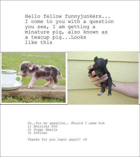 funny pig names puns