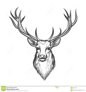 hand drawn deer head stock vector image 65407467