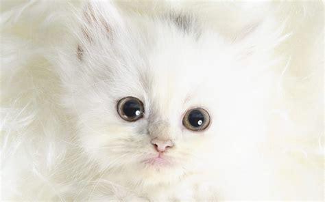wallpaper cute cats kittens kittens images cute kitten wallpaper hd wallpaper and
