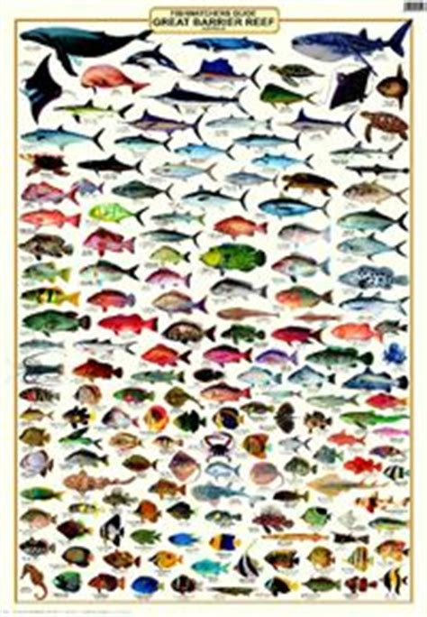 coral reefs maldives reef id books books fishes of the maldives identification chart water