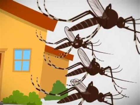 imagenes comicas de zancudos zancudo con dengue youtube