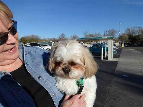 woodland shih tzu low cost and cat in northern california mobile clinic petcare woodland ca
