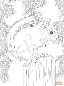 coloring page gray squirrel american red squirrel coloring page free printable