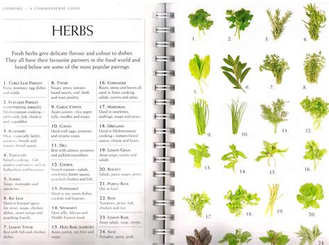herbs chart the benefits of herbs