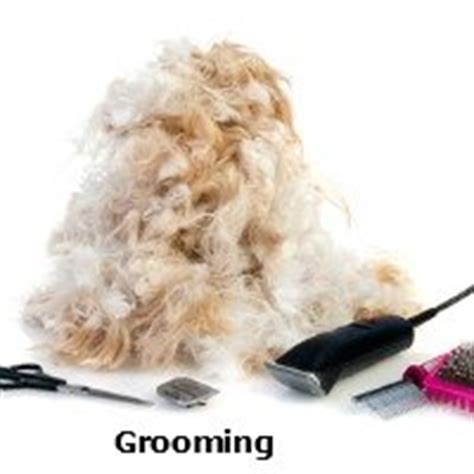 shih tzu grooming how often grooming the shih tzu an overview