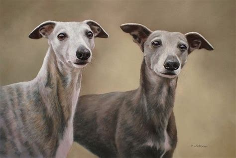 Ridiculously Cool Website Whippet Grey by 17 Best Images About Whippet On Barking