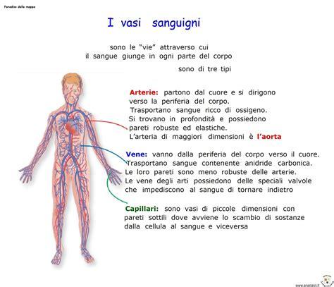i vasi sanguigni paradiso delle mappe i vasi sanguigni