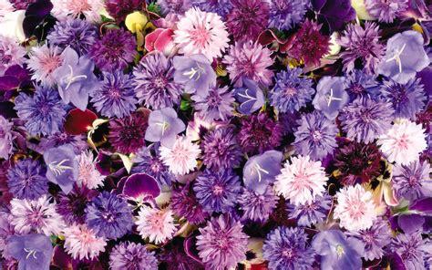 wallpaper tumblr violet habrumalas purple flowers tumblr images