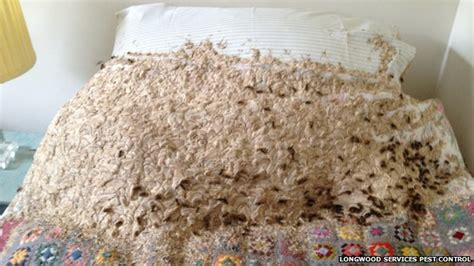 wasp in bedroom winchester woman finds 3ft wasp nest on bed bbc news