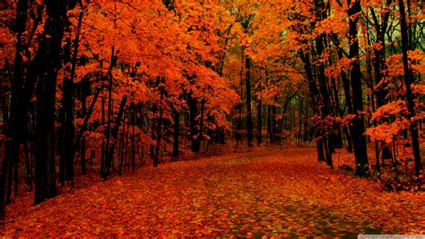 fall backgrounds fall wallpaper hd
