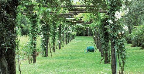 il giardino oltre la siepe oltre la siepe