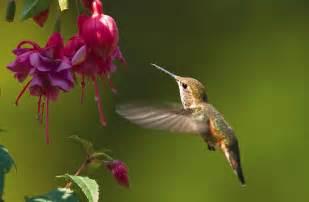 wild birds unlimited when to put up hummingbird feeders