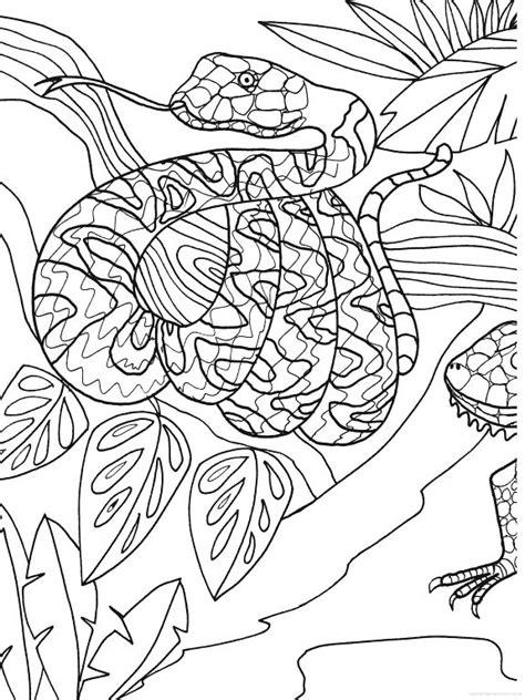 the heaven zoo coloring book books 17 beste afbeeldingen slangen op