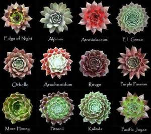 assorted types of succulent 4 succulents tutorials ideas pinterest types of succulents