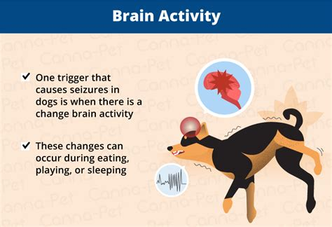 what causes dogs to seizures why do dogs seizures while sleeping canna pet