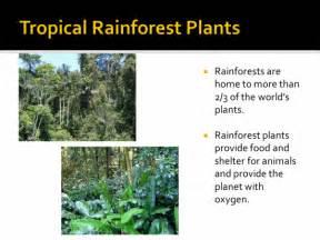 Tropical Rainforest Plant Facts - tropical rainforest ecosystems activity k 5 computer lab