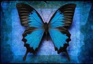 imagenes de mariposas azules con frases პეპელა კულინარია culinary