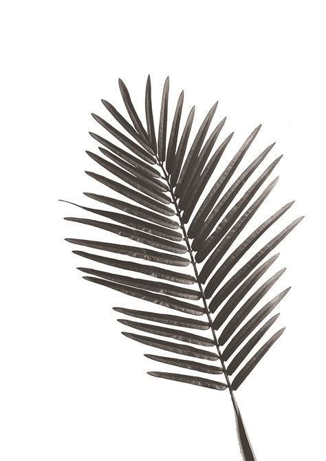 Home Interior Decor by Freebie Palm Leaf Exotic Poster