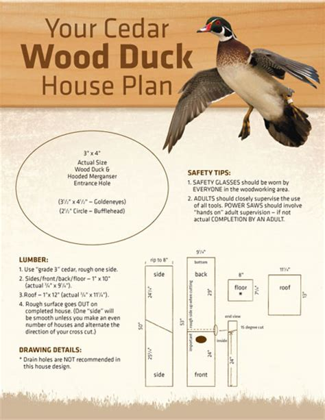 Nest Box Nests And Ducks On Pinterest Wood Duck Houses Plans