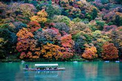 Katsura tree in fall color stock image. Image of fall