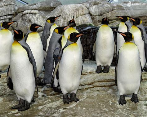 wäscherei zoologischer garten berlin berlin brandenburg commission gt parkanlagen