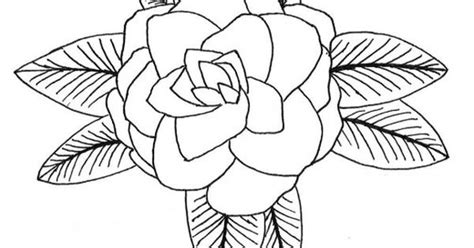 how to draw a camellia camellia coloring pages and