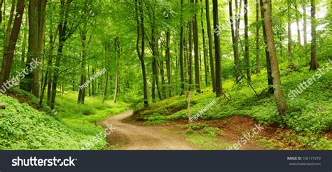 lush green forest path sunny wallpapers lush green panorama of a path through a lush green summer forest