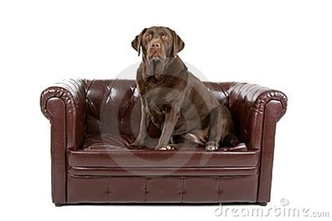 dog leather couch cold krui radio