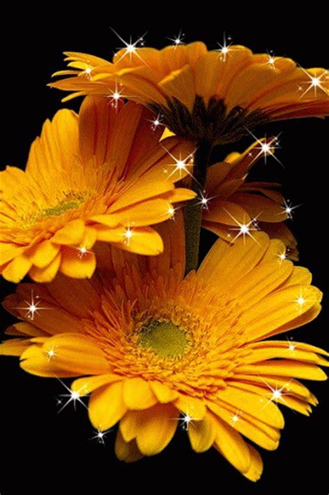 imagenes de rosas en movimiento 3d animaciones con rosas o flores con brillo y destello