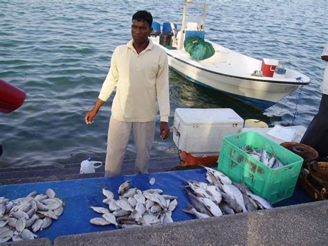 buy a boat qatar what to do in qatar qatar visitor travel guide to
