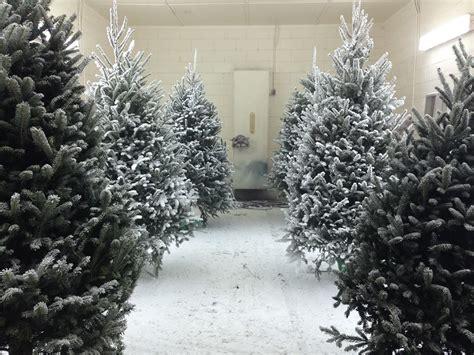 booth s christmas tree farm home