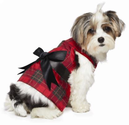petsmart clothes looking for clothes this season the mount 6 pack