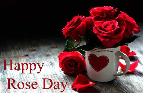 roses on day day pictures images photos