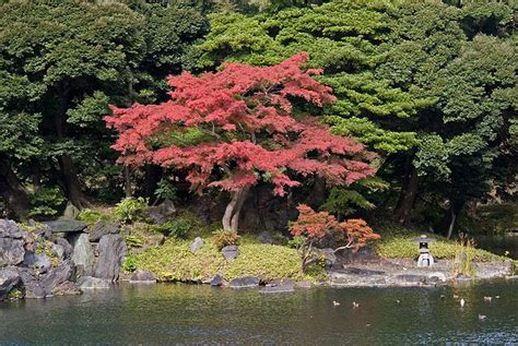 Most Beautiful Botanical Gardens The World S Most Beautiful Botanical Gardens Koishikawa Korakuen Garden Tokyo Japan