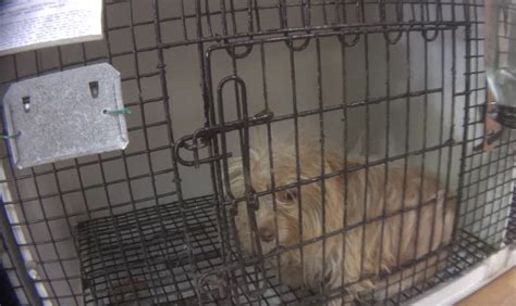 puppy stores nj breaking news hsus investigation connects new jersey pet stores to notorious midwest