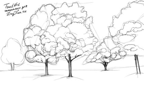 maple tree drawing how to draw a maple tree step by step arcmel