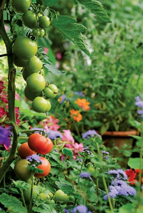 flower and vegetable garden flowers and vegetables for your cutting garden house