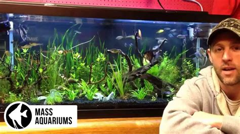 how to keep fish tank water clear how to keep clear water in your aquarium clean