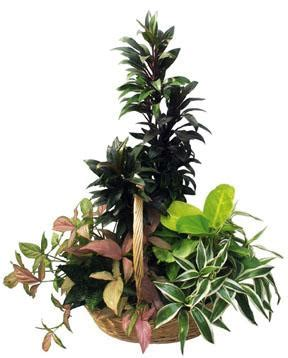 the potting bench new bedford ma the potting bench arrangement of plants new bedford ma 02745 ftd florist flower and