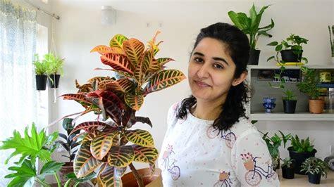 indoor plants  india  decoration youtube